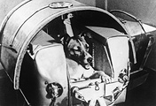 November 13, 1957. Dog Laika in a hermetic cabin before installation on the satellite
