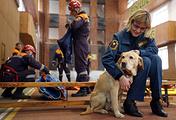 Собака кинологической службы МЧС во время показательных выступлений, Казань, 2016