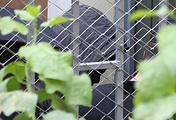 Ученик 9-го класса, устроивший стрельбу в школе в Ивантеевке, у здания Басманного суда