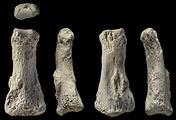 Останки древних людей, найденные в Саудовской Аравии