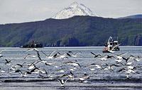 Avacha Bay, a Pacific Ocean bay on the southeastern coast of the Kamchatka Peninsula
