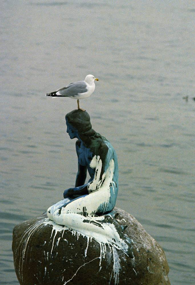 "A sea gull rests on the head of the ""little mermaid"" statue in Copenhagen, Denmark on Feb. 7, 1972 after the harbor landmark was splashed with white paint"