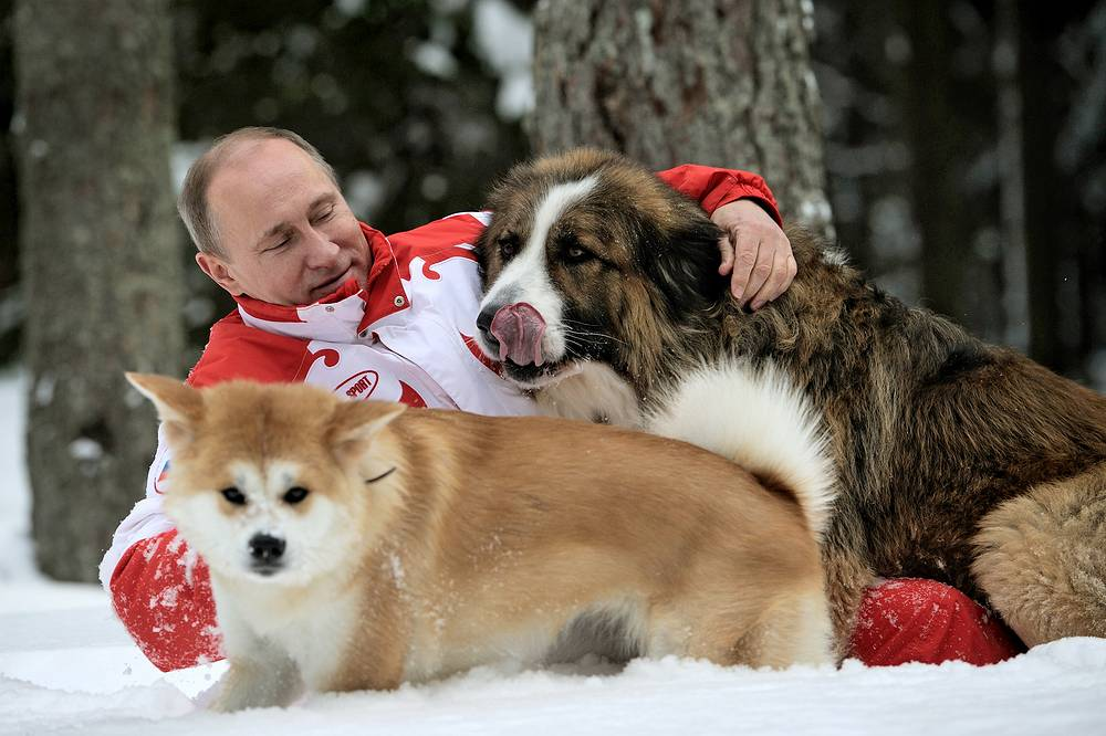Russian President Vladimir Putin has an akita named Yume and a Bulgarian shepherd karakachan dog named Buffy. Yume is a gift from Prime Minister of Japan Shinzo Abe, while Buffy was given by  then Bulgarian prime minister Boyko Borisov