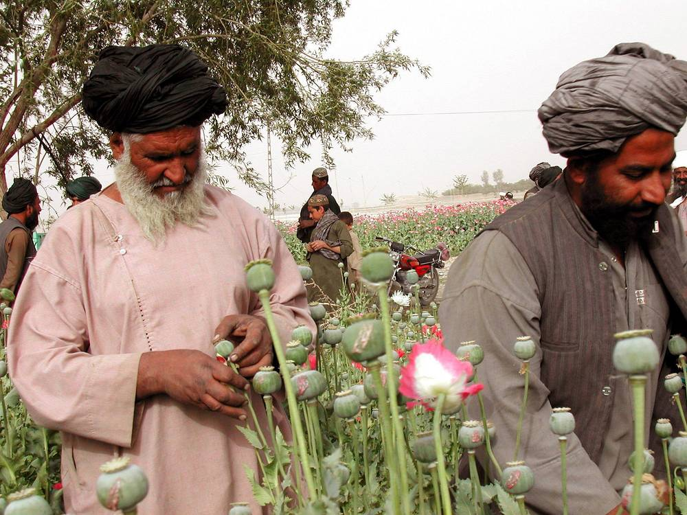Over the past few years the total area sown to opium poppy in Afghanistan has grown to 250,000 hectares. In case of destabilization of the country, the drug problem is likely to affect other countries of the region