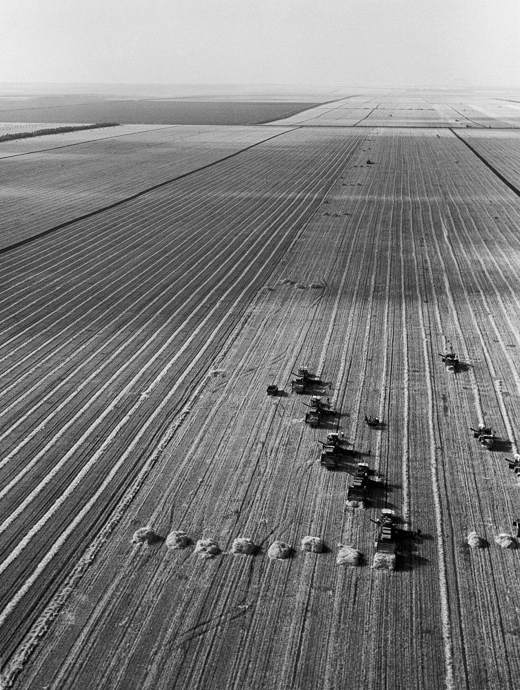 Krasnodar Krai. Grain crop harvesting, 1961