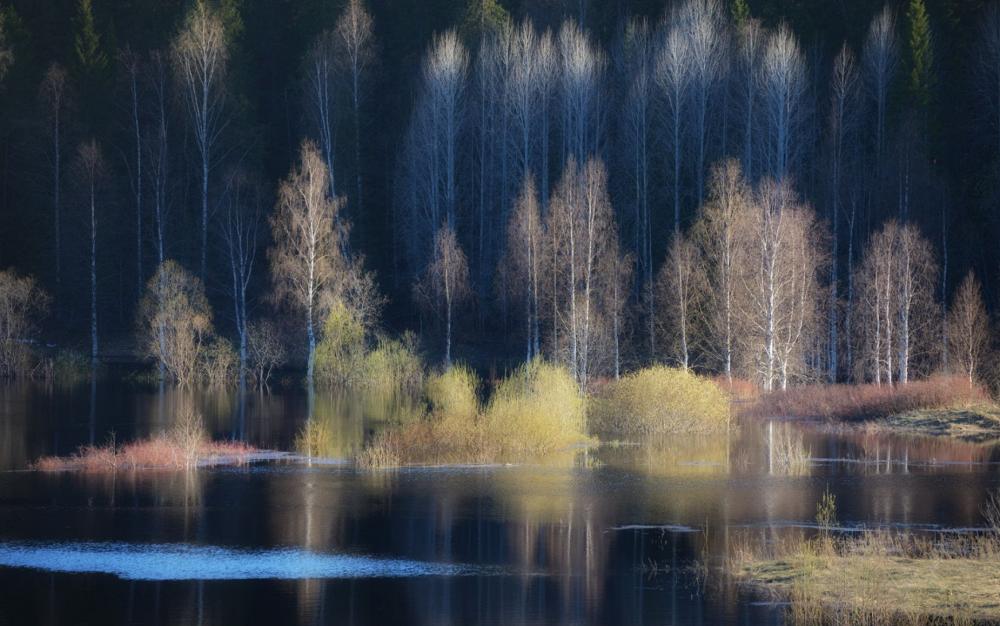 Early spring, by Yulia Popova. Photo: Vynogradovskiy district, Arkhangelsk region