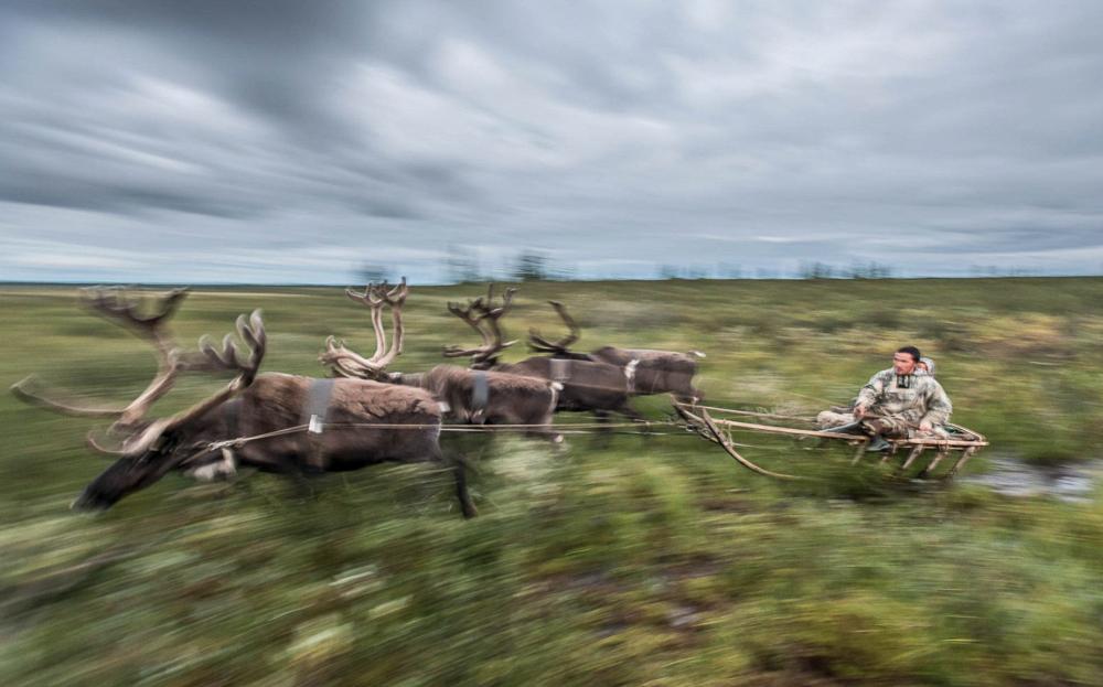 Multi-purpose transport, by Daniil Khusainov. Photo: Reindeer team, Yamalo-Nenets Autonomous Okrug
