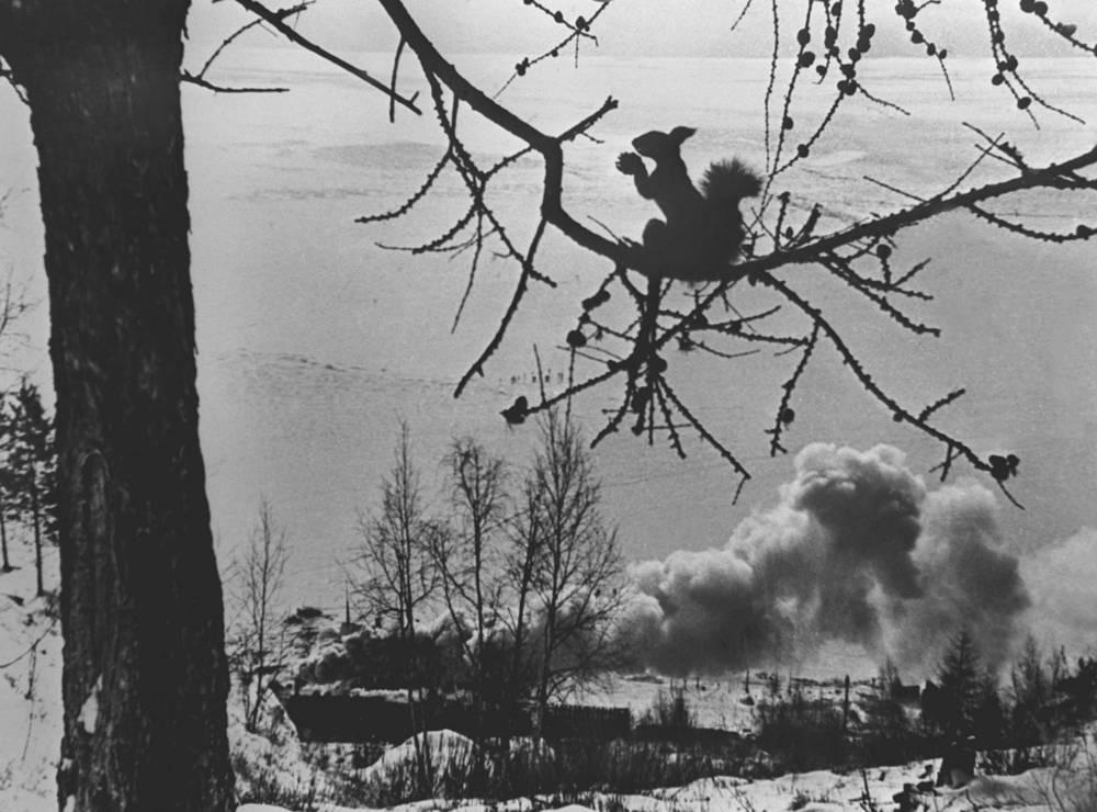 Turkestan–Siberia railway. A squirrel, 1930