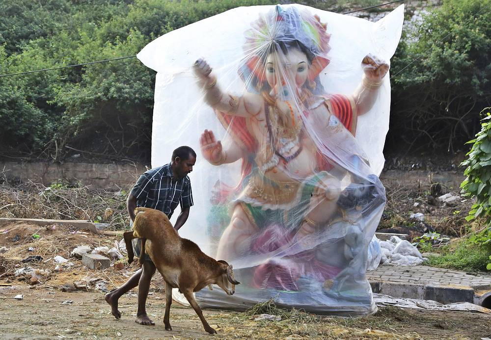 A trader pushes his goat past an idol of elephant-headed Hindu god Ganesha ahead of Eid al-Adha in Bangalore, India