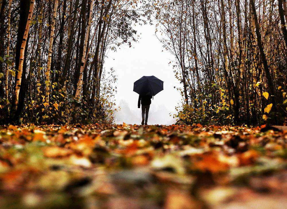 A man in a forest in Frankfurt, Germany, November 15
