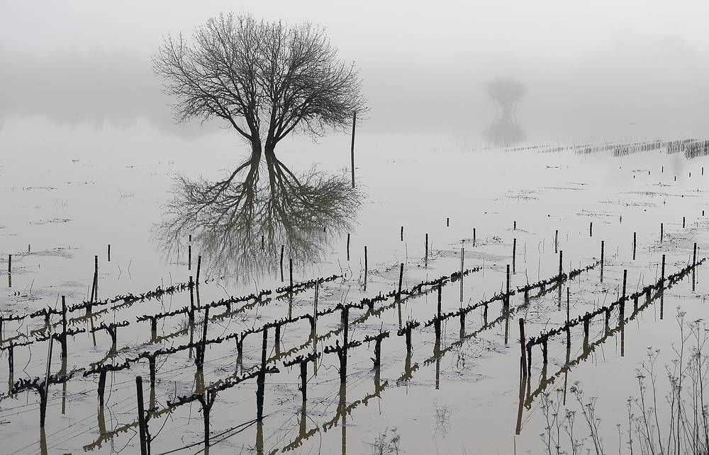Flooded vineyards in the Russian River Valley in Forestville, USA, January 9
