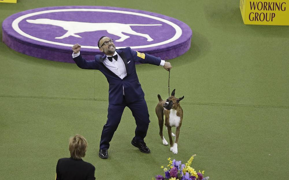 A handler celebrates after Devlin, a boxer, won the working group during the 141st Westminster Dog Show