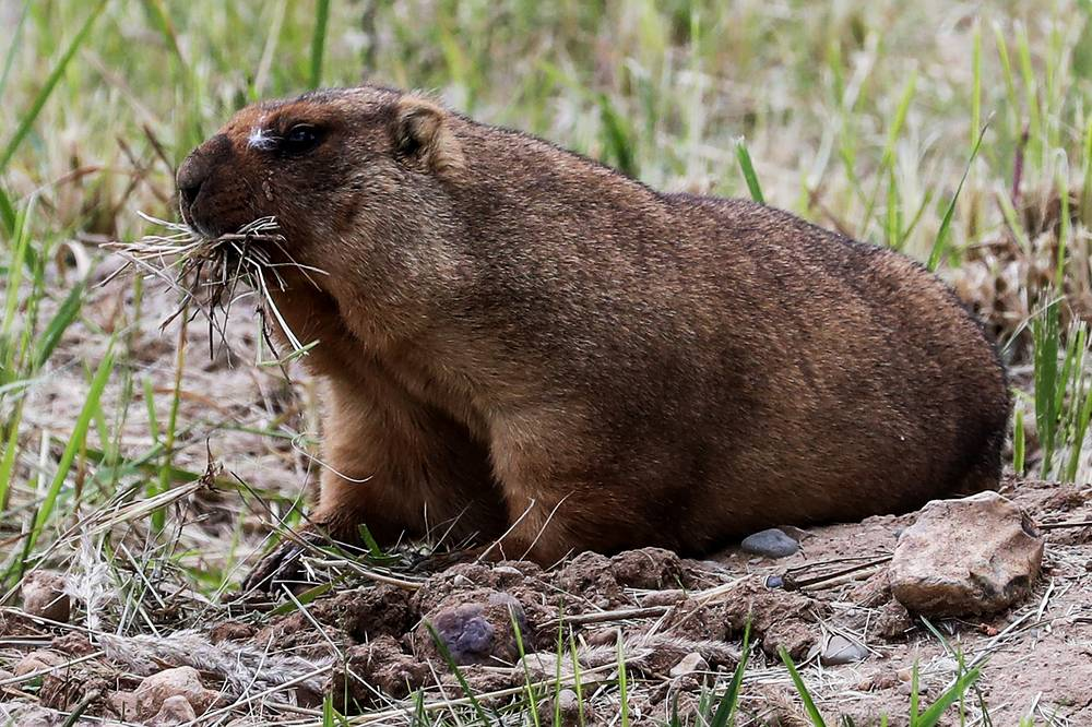 At this time, its collection comprises 10 species of carnivores, 6 species of ungulates, 74 species of birds and a great number of domestic animals. Photo: A Bobak marmot