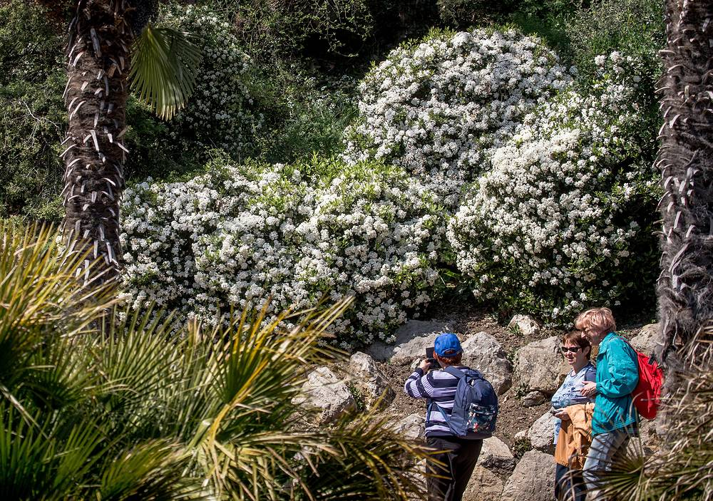People walking in Yalta's Nikitsky Botanical Garden