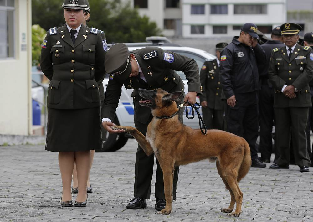 A retiring police dog spends a last moment with his handler before being handed over to his new caretakers in Quito, Ecuador, May 9. The ceremony retired 61 police dogs who've spent years sniffing out illegal drugs and who helped rescuers find victims