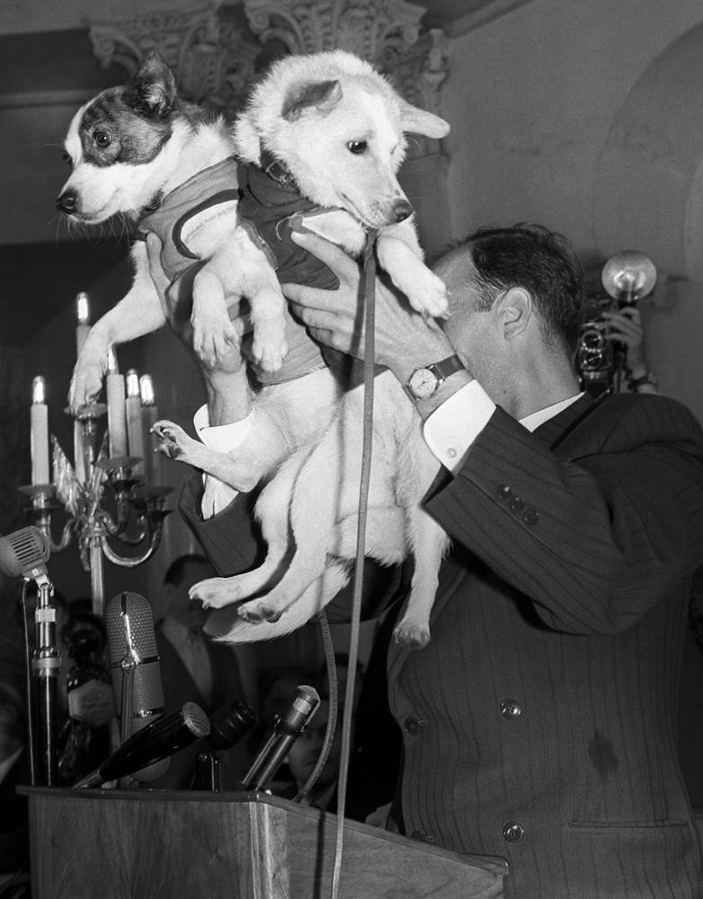 Both dogs were recovered safely after the flight and a year later Strelka had puppies, one of which was sent to First Lady of the US Jacqueline Kennedy