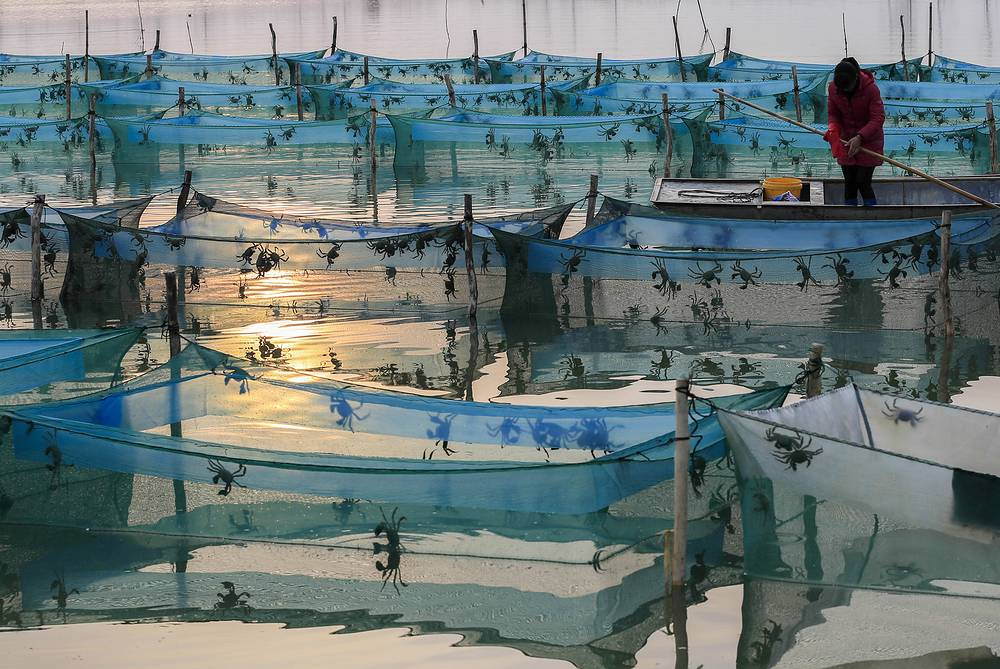 Nets of a large crab farm in Huaian, eastern China, November 13