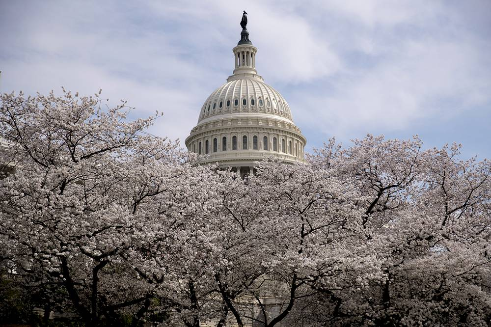 The Dome of the US Capitol Building is visible as cherry blossom trees bloom in Washington