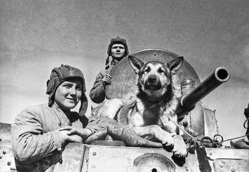 Разведчики с собакой. 1942 г.