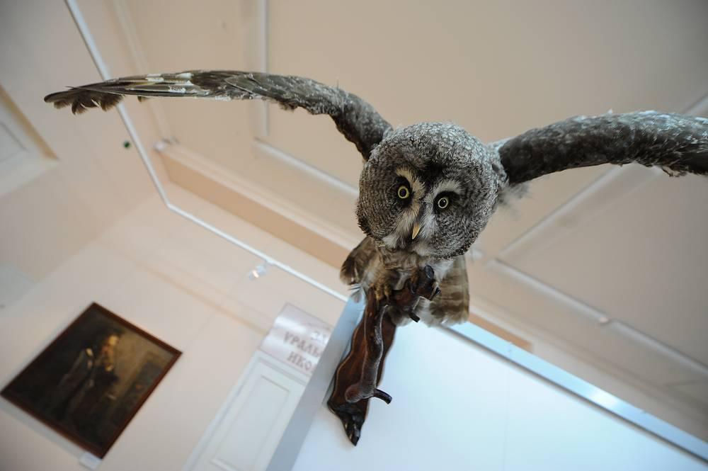 """Чучело совы - дар """"Музею природы"""""""