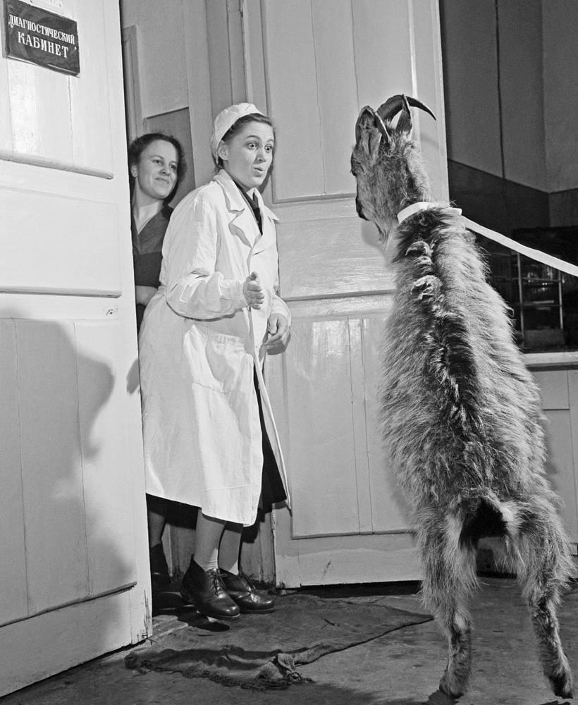 В ветлечебнице Московского зоопарка. 1961 год
