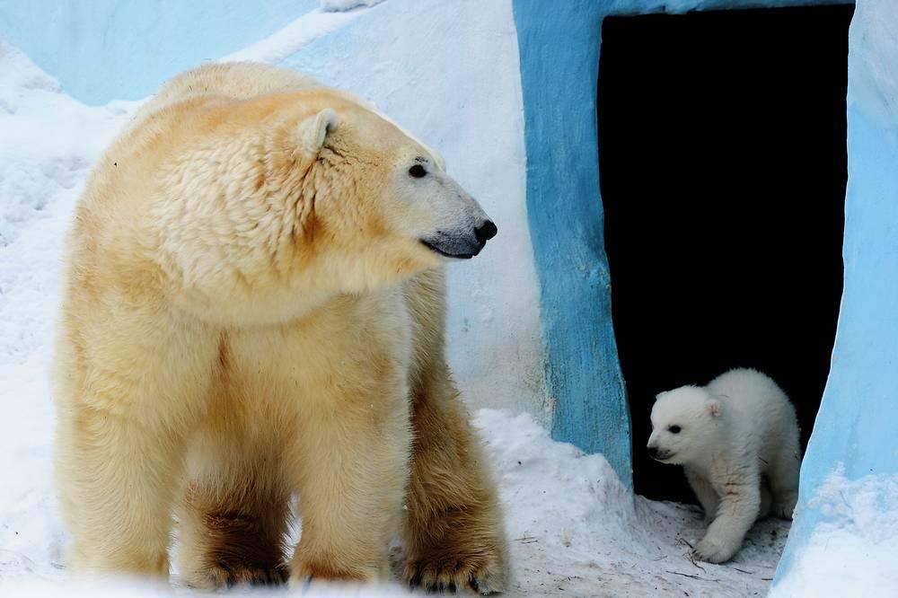 Медведица Герда и ее первенец