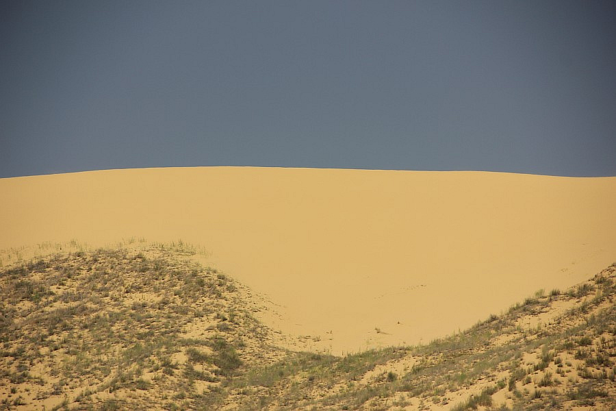 В песках Сарыкума встречаются змеи (гадюки и обыкновенный уж), а также более крупная ящерица — кавказская агама.