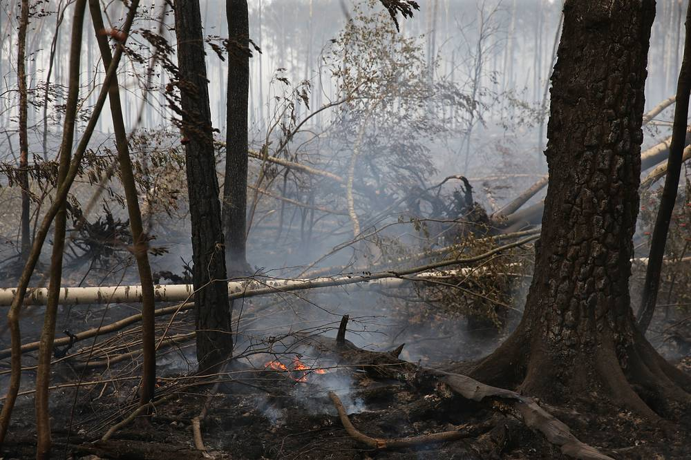 В лесах Подмосковья ведется как авиационное, так и наземное патрулирование. Кроме того, за возникновением пожаров следят с помощью системы видеомониторинга