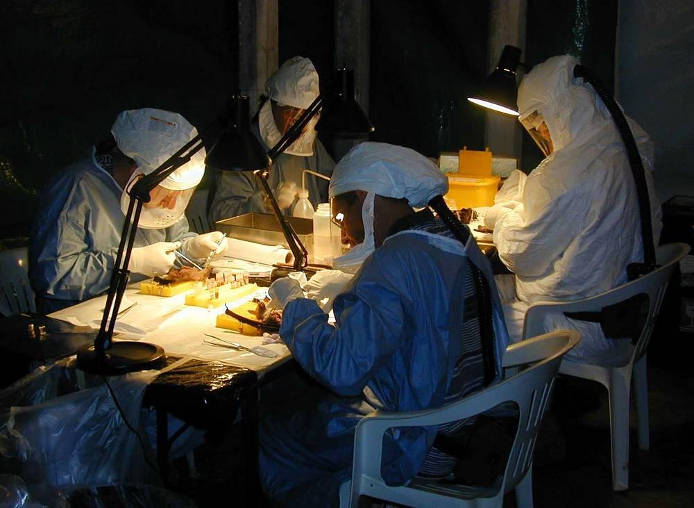В июле 2014 года Всемирная организация здравоохранения объявила о старте масштабной программы на $100 млн по борьбе со вспышкой лихорадки Эбола. На фото: врачи-вирусологи исследуют летучих мышей во время изучения вируса Эбола