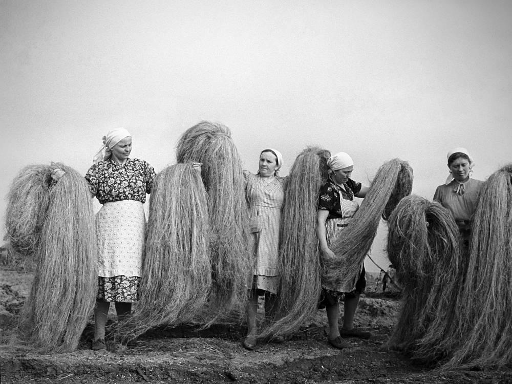 Сортировщицы пенькозавода в селе Каменовки. Курская область, 1964 год