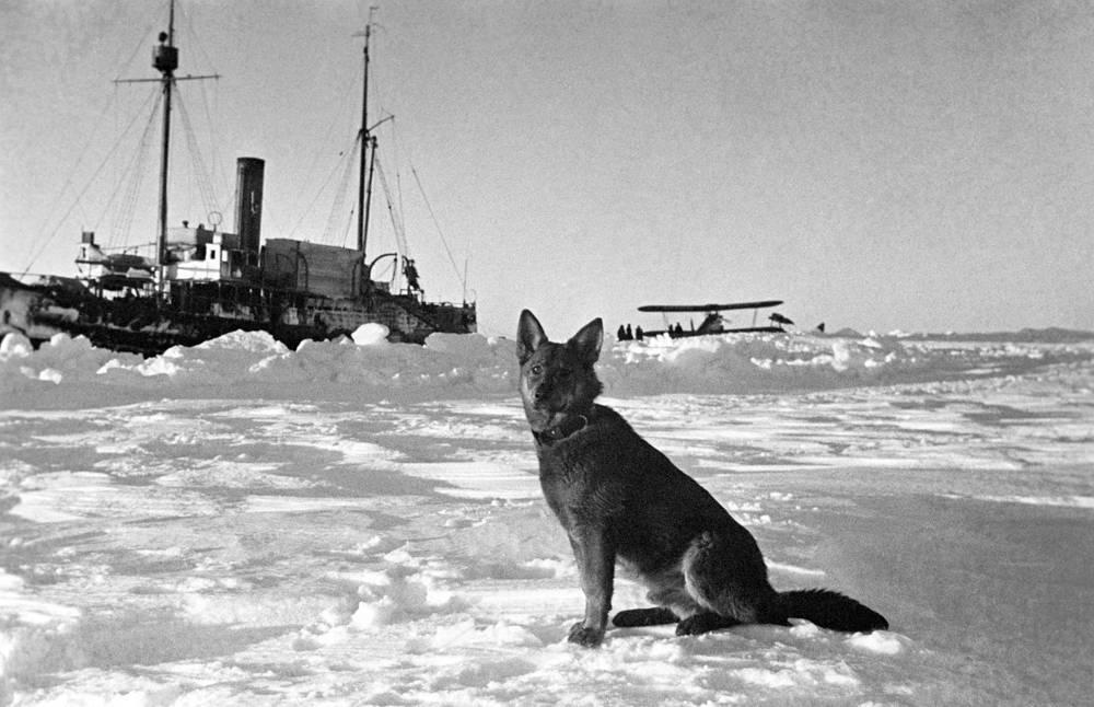 """Ледокол """"Таймыр"""", самолет летчика Власова и пес Джон, прибывшие для снятия с льдины экспедиции Ивана Папанина"""