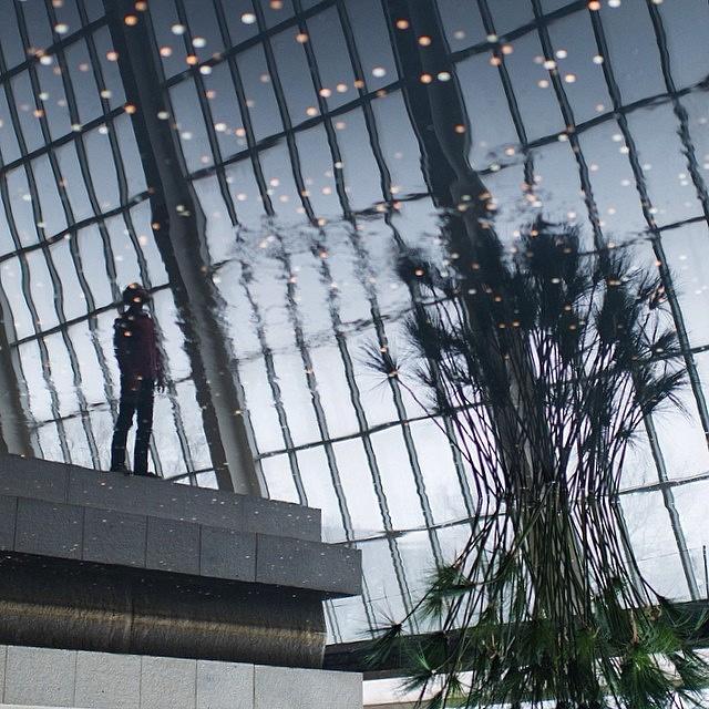 Метрополитен-музей, с которого все началось, в объективе основателя движения Дейва Кругмана