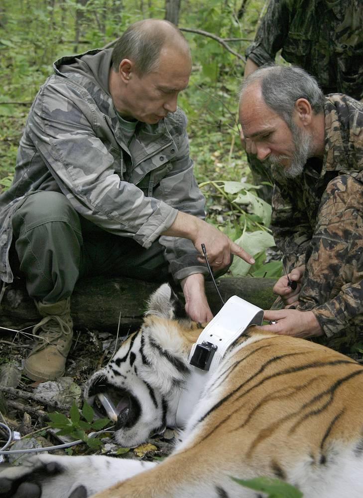 В 2008 году Владимир Путин ознакомился с программой по изучению уссурийских тигров в заповеднике дальневосточного отделения РАН. Научные сотрудники продемонстрировали специальный спутниковый ошейник для дистанционного отслеживания животных