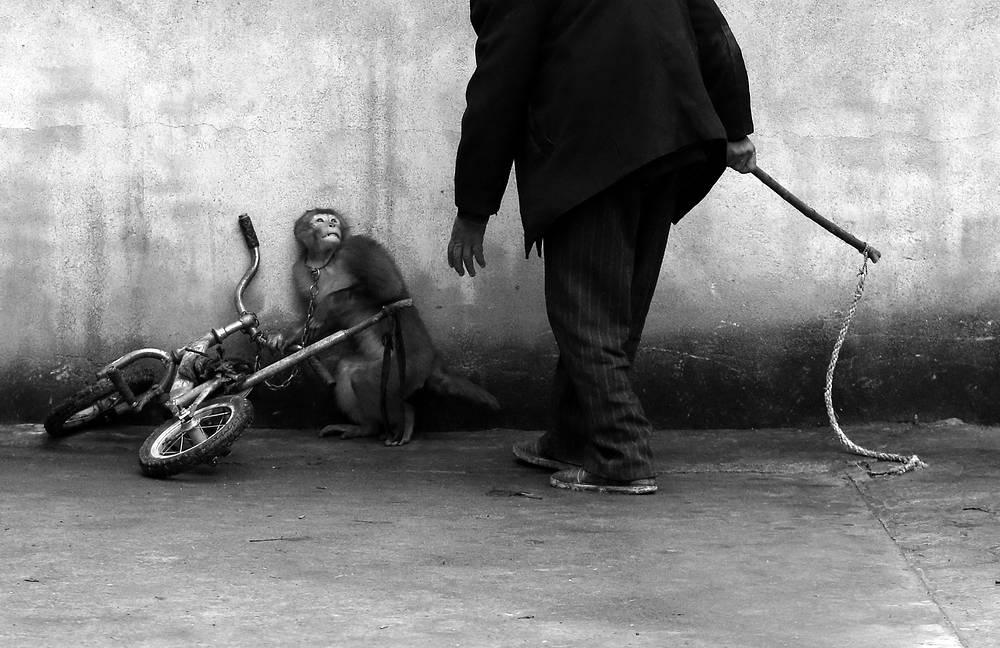 """Йонгжи Чу, Китай. Первое место в категории """"Природа. Одиночные снимки"""""""