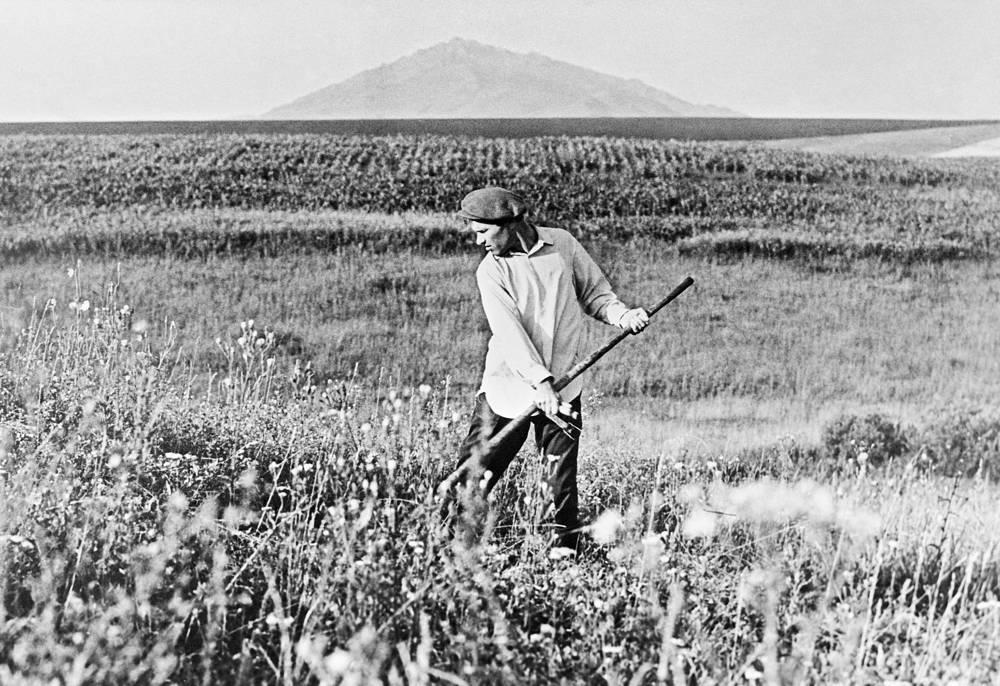 Писатель, кинорежиссер, драматург, актер Василий Шукшин во время покоса травы в селе Сростки Бийского района, Алтайский край, 1969 год