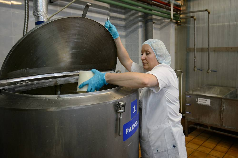 Работник цеха засаливает сыр