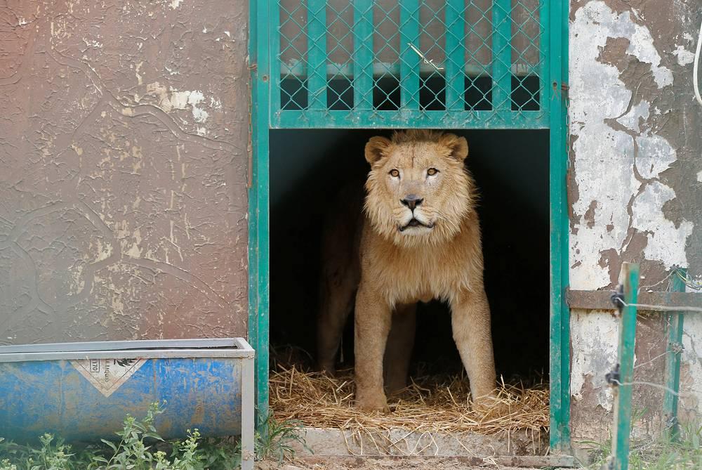 На территории реабилитационного центра в Иордании, 11 апреля.