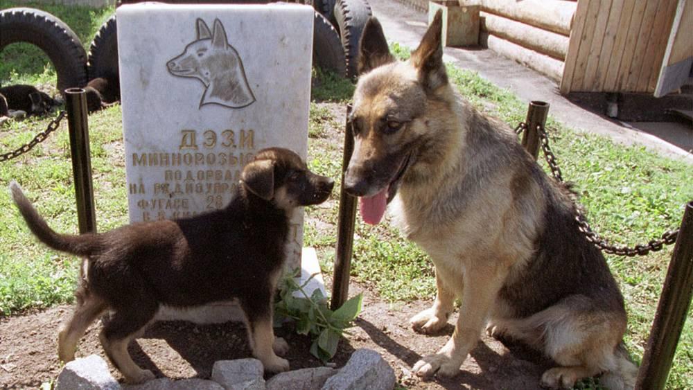 Памятник минно-розыскной собаке Дэзи, погибшей в Чечне