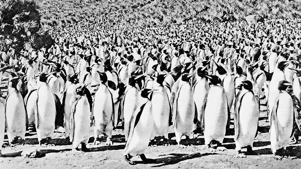 Антарктида. Пингвины на одном из скалистых берегов острова Южная Георгия
