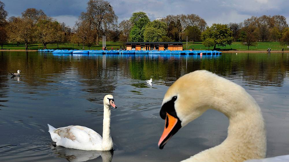 На этом озере в Гайд-парке пройдут соревнования по триатлону