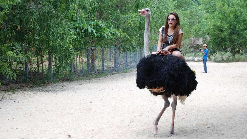 Туристы любят кататься на страусах