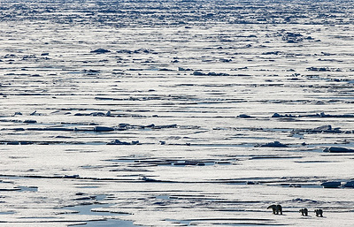 Russia is not concerned of Canada's Arctic offshore studies — minister