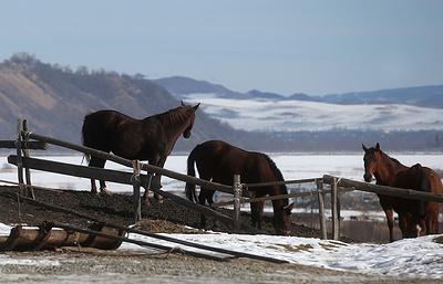 Все как у батыров: что ждет туристов в Карачаево-Черкесии зимой