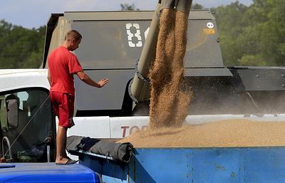 Как регионы решают проблемы с транспортировкой зерна
