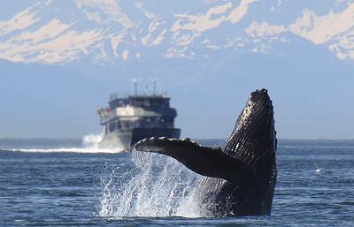 Мировое сообщество призывает Японию прекратить китобойный промысел в Антарктике