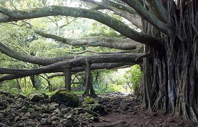 В тропиках ускорилась гибель деревьев из-за потепления