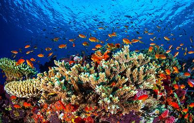 Океанографы предложили защищать коралловые рифы от обесцвечивания с помощью облаков