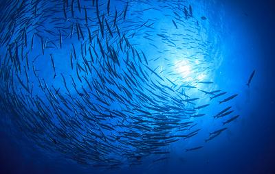 Влияние изменения климата на мировое рыболовство к 2050 году обсудят на МРФ-2018
