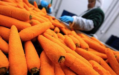 Российские ученые разработают новую оранжерею для выращивания моркови на МКС