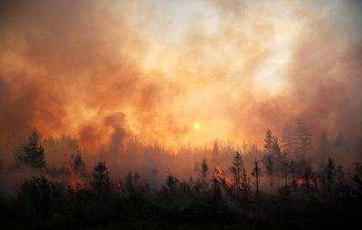 """Лесные пожары в России. Статистика и """"антирекорды"""""""